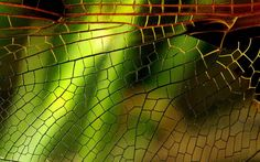 stained glass dragon fly - Google Search