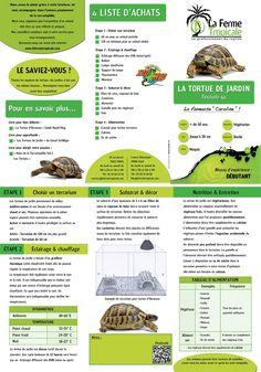 petit conseil sur notre amie la tortue