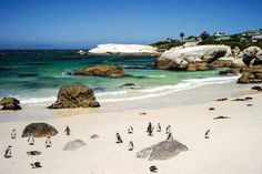 There aren't many places in the world where you can get up close and personal with penguins, swim near them, and frolic in the sun with them.Boulder Beach in South Africa Oh The Places You'll Go, Places To Travel, Places To Visit, Dream Vacations, Vacation Spots, Dream Trips, Beautiful World, Beautiful Places, Boulder Beach