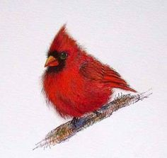 Valda Fitzpatrick Artwork Title: Red Cardinal, Reproduction. Contemporary artist  from mt. gilead Ohio United States. Premiere Artist Portfolio Website - absolutearts.com