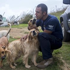 Rescuers Rush To Help Animals On Tiny 'Forgotten' Island Wrecked By Hurricane