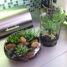 My DIY mini succulent gardens