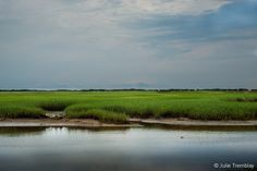 "©2009 JulieTremblay; ""Salt Marsh 2"": Provincetown, MA"