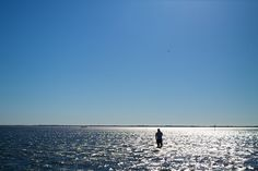 Virginia Oyster Road Trip: The Eastern Shore & Hog Island Bay - In A Half Shell