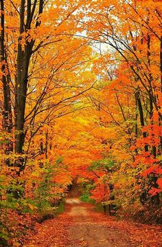 A country road wanders away into a tunnel of autumn trees. This image was captured in northern Michigan near Cadillac, Michigan, USA.