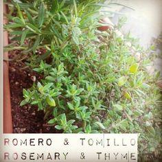 My #herbs  #urbangarden #veggies #igersmadrid #urbangardenersrepublic #growyourown #gardening #greenthumb #seeds #raisedbed #sprout #huertourbano #huerto #horticulture #semilleros #brote #semilla #homegrown #gogreen #Madrid #soil #maceta #horturba #balconygarden #balcony #growwhatyoueat #thyme #tomillo #lemonthyme #tomillolimonero #rosemary #Romero #medicinal