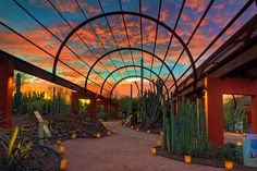 Where to Watch the Sunset in Scottsdale One of Arizona's greatest pleasures is sitting outside in evening and watching the sky transform from a brilliant blue to a Technicolor rainbow of bright yellows, hot . Desert Botanical Garden Phoenix, Botanical Gardens, Oh The Places You'll Go, Places To Travel, Places To Visit, Phoenix Arizona, Tucson, Grand Canyon, Le Nil