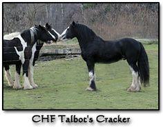 Talbot's Cracker