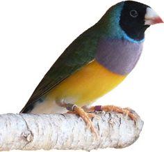Anem al Jardí dels Ocells, a Vilafranca del Penedès My Animal, Parrot, Bird, Animals, Parrot Bird, Animales, Animaux, Birds, Animal