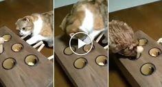 Este é Provavelmente o Melhor Brinquedo Para Manter Os Gatos Entretidos Durante Horas http://www.funco.biz/provavelmente-melhor-brinquedo-manter-os-gatos-entretidos-horas/