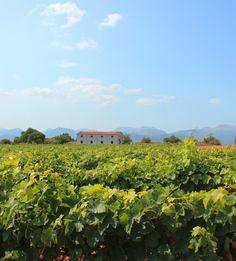 Unser Wein vom Weingut Son Prim  | Barefoot Living by Til Schweiger #wine #portugal