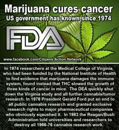 Weed cures Cancer