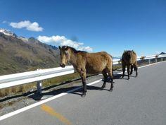 Peru Machu Picchu Motorcycle Adventure : https://www.motoquest.com/guided-motorcycle-tour.php?peru-machu-picchu-adventure-25