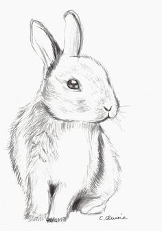 Drawing of a cute bunny. Used Derwent pencils. Fluffy Bunny by Christina Quine Pencil Art Drawings, Art Drawings Sketches, Cute Drawings, Sketch Art, Fluffy Bunny, Bunny Art, Cute Bunny, Bunny Bunny, Bunny Sketches