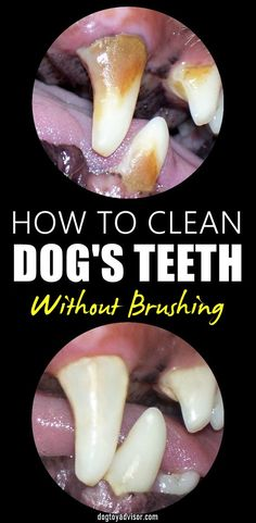 Dental Health, Pet Health, Health Tips, Oral Health, Health Care, Dog Care Tips, Pet Care, Dog Teeth, Teeth Cleaning