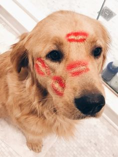 This sweet puppy golden retriever will make you happy. Dogs are amazing friends. Cute Funny Animals, Cute Baby Animals, Animals And Pets, Cute Dogs And Puppies, I Love Dogs, Doggies, Lab Puppies, Retriever Puppies, Cute Creatures
