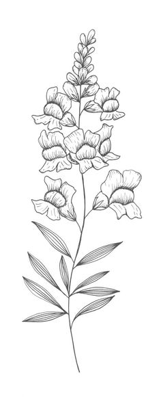 https://i.pinimg.com/474x/3e/45/72/3e45722edcbfa28183071711efb509ac--snapdragon-illustration-snapdragon-tattoo.jpg