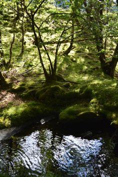 Arthurian forests in Dolwyddelan