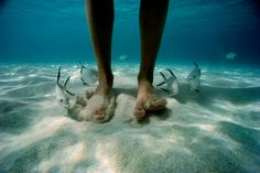 toes sand water fish