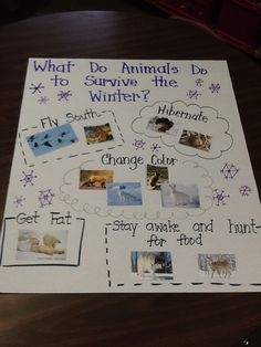 What do animals do in the winter?