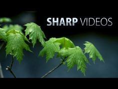▶ How to get sharp & detailed videos! DSLR video tutorial - Fenchel and Janisch have some great videos #FilmmakingTipsandIdeas
