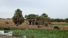 Esteros de Camaguán, En este sector funciona la Reserva de Fauna Silvestre Esteros de Camaguán que fue decretada por el gobierno nacional el 9 de marzo del 2000, por medio de Gaceta Oficial.