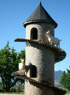 Fair View Wine Estate Cape Town.  [a smaller version of this tower would make a great chicken play-house--as part of the coup.]