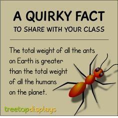 A quirky fact about ants to share with your class - from Treetop Displays. Visit our TpT store for printable resources by clicking on the provided links. Designed by teachers for Pre-Kindergarten to Grade. Fun Facts For Kids, Fun Facts About Animals, Jokes For Kids, Animal Facts, Wtf Fun Facts, Science For Kids, Learning Activities, Kids Learning, Science Classroom