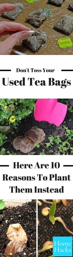 There are so many great tea bag uses, but gardening is one of my favorites. Tea bag gardening is a hack that every gardening enthusiast needs to know! #gardening #teabags #garden #DIY #tea #gardeningtips #gardeninghacks