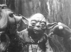 When Kermit met Yoda: The Muppets on set of 'The Empire Strikes Back' - Flashbak Star Wars Love, Star Wars Art, Star Trek, Kermit And Miss Piggy, The Muppet Show, Star Wars Pictures, The Empire Strikes Back, Scene Photo, Star Wars Episodes