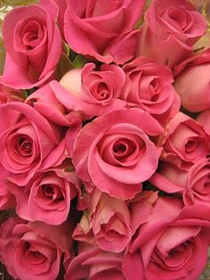 roses, my favorite flower...being born in June it is the flower for my month!