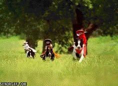 Monkey Poems Funny Funny Gif #9041 - Funny Monkey Gifs| Funny Gifs| Monkey Gifs