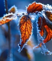 Winter Leaves with frost Autumn Rain, Warm Autumn, Winter Leaves, Winter Flowers, Autumn Scenes, Winter Scenery, Nature Table, Photo Journal, Winter Wonder