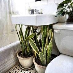 Houseplants as Camouflage : Remodelista Such a great idea- use houseplants under the bathroom sink to hide pipes House Design, House, Interior, Home, Home Improvement, Apartment Tour, Indoor, Bathroom Plants, Indoor Plants