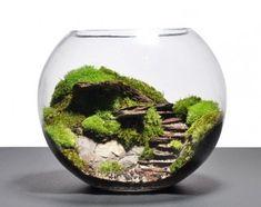 un aquarium transformée en formidable terrarium vert, un joli paysage pour votre decor terrarium
