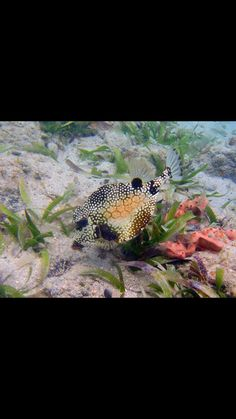 Smooth trunkfish Under The Sea, Caribbean, Aquarium, Smooth, Fish, Pets, Animals, Fish Stand, Animals And Pets