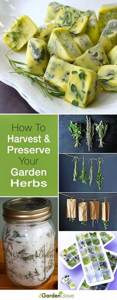 How To Harvest and Preserve Your Garden Herbs | Gardening Things