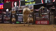 TOP BULL TLW's Big Cat takes out Matt Triplett for 45.75 points - Published on Feb 26, 2017  TOP BULL TLW's Big Cat takes out Matt Triplett for 45.75 points in Round 4 of the 2017 PBR Built Ford Tough Series in St. Louis, MO. Note: A new high for Big Cat!