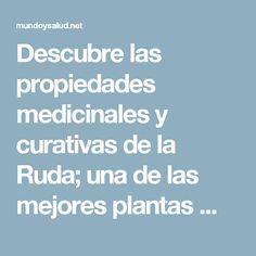 Descubre las propiedades medicinales y curativas de la Ruda; una de las mejores plantas medicinales.