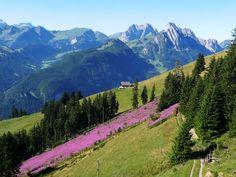Top Wanderungen spiegeln die Wanderwege in der Region Gstaad wieder. Gstaad