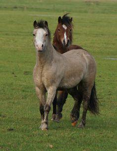 Vrolijke paarden