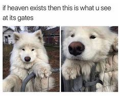 Funny Dog Pictures Dump of the Day - 38