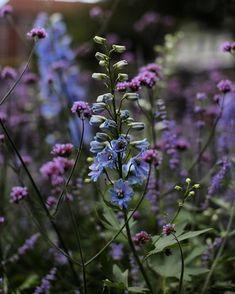 Beautiful Gardens, Beautiful Flowers, Blue And Purple Flowers, City Pass, Flower Images, Garden Plants, Wild Flowers, Garden Design, Bloom