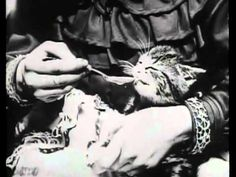 ▶ George Albert Smith: Sick Kitten (1903)  Before Lolcats, there was The Sick Kitten, a short film made in 1903 – four years after the birth of cinema, & more than a century before today's cat-dominated internet scene. The premise is simple: two children play doctors with a kitten who is suffering from an unknown 'illness'. It licks away at the 'medicine', which we suspect is really milk. Within seconds, the kitty is cured and the young duo congratulate themselves with a triumphant…