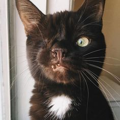 One-Eyed Rescue Cat Looks Like A Pirate