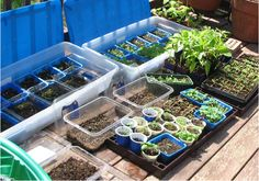 Stephie McCarthy Milk jugs never fit my gardening needs, here's what I use to sow seeds in winter