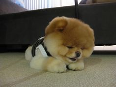 OMG, is this NOT the cutest fluffy thing you have ever seen before??!?!?!