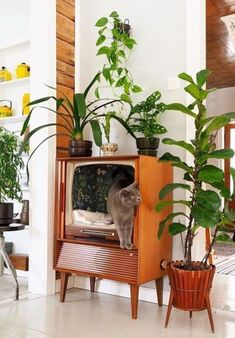 15 Mind-Blowing Cat Houses Your Cat Needs - HomelySmart Cat Furniture, Furniture For You, Furniture Online, Furniture Stores, Home Design, Interior Design, Design Design, Design Ideas, Cat Room