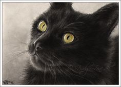 cat art | ... lovely and haunting black cat art at Deviant Art search, black cats