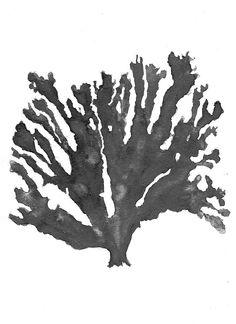 Sea Coral in Charcoal Print by Driftwood Interiors